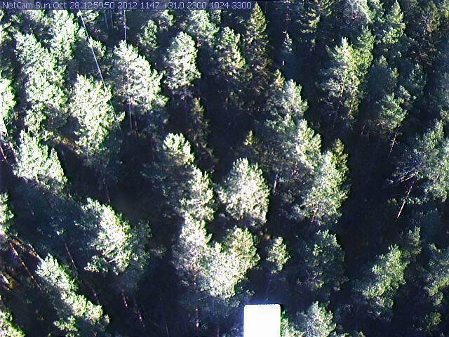 Norunda Webcam